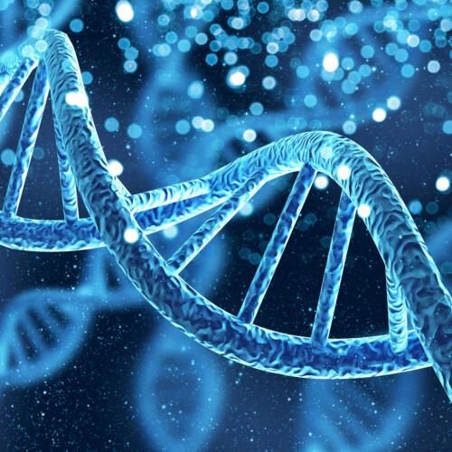 サーチュイン遺伝子と細胞再活性化の関係